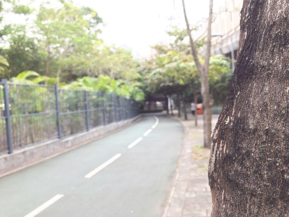 Tseung Kwan O Tree