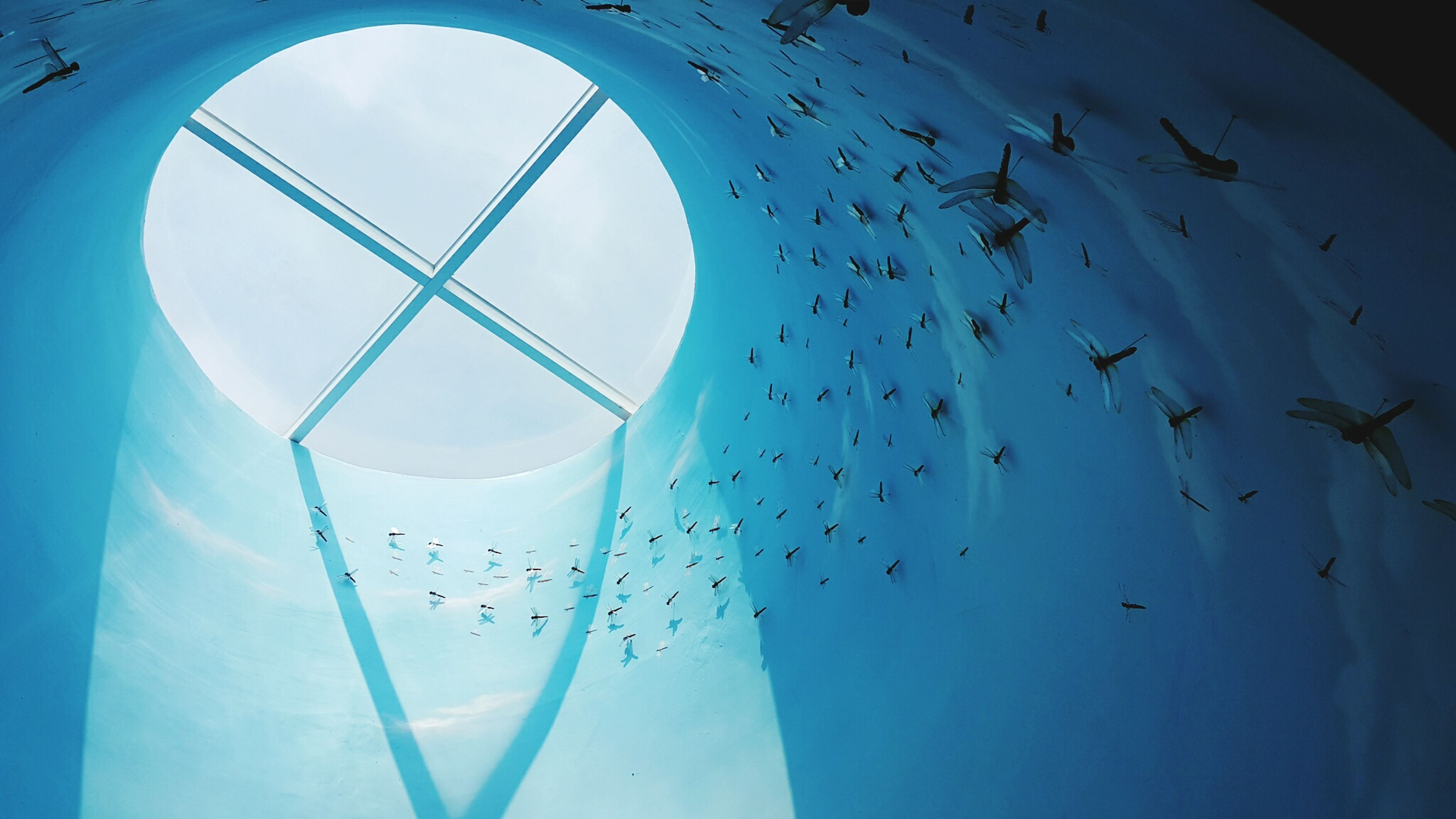 low angle view, flying, sky, blue, hanging, glass - material, indoors, built structure, mid-air, architecture, day, design, clear sky, no people, shape, pattern, window, decoration
