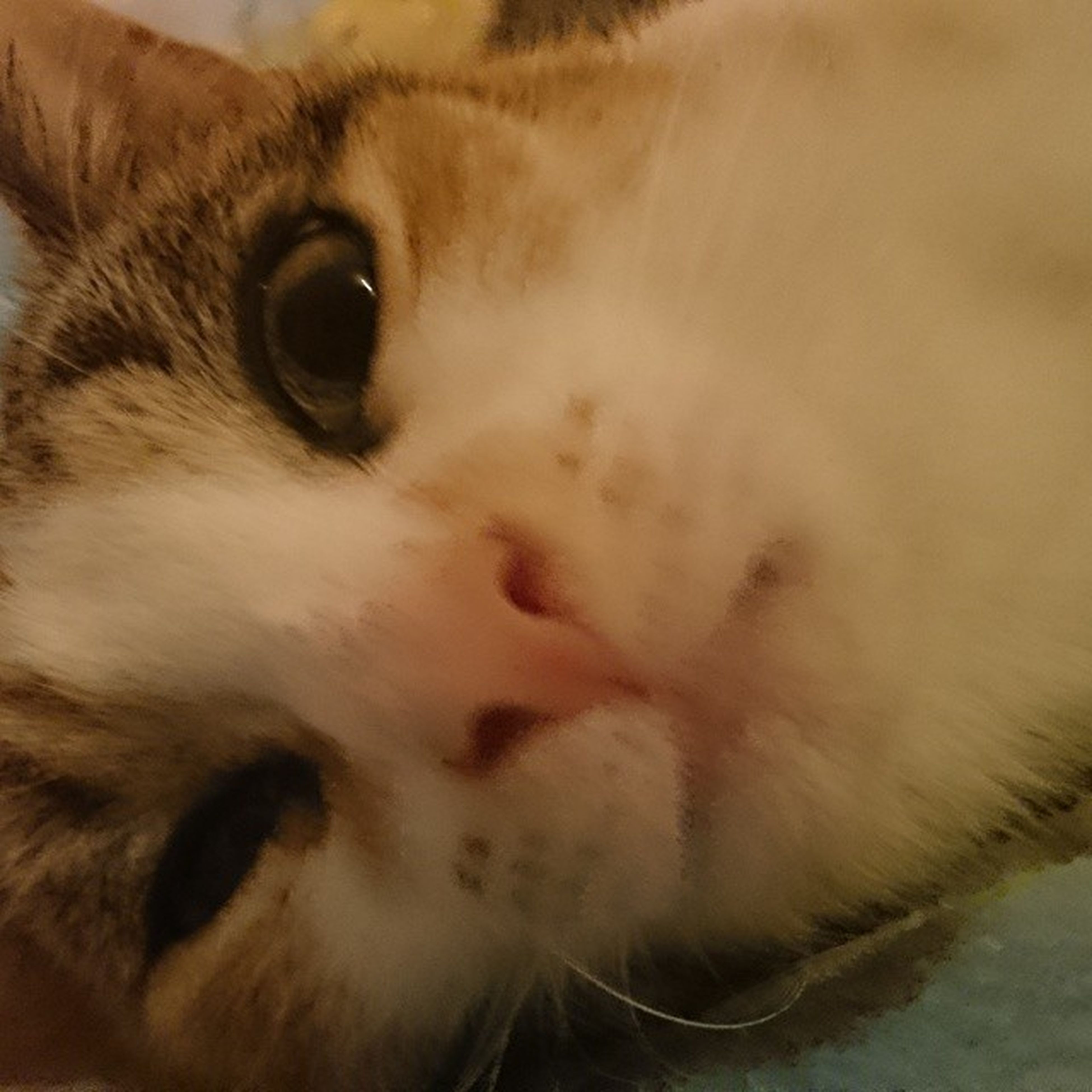 domestic animals, pets, animal themes, one animal, mammal, domestic cat, animal head, cat, close-up, indoors, whisker, animal body part, feline, portrait, animal eye, looking at camera, relaxation, snout, part of, animal hair