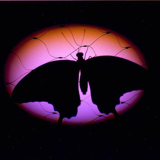 Яркие акценты вашего интерьера -фото 45*45 см Film Filmfoto 35mm Analogphotography Art Photoart Design Decor Butterfly