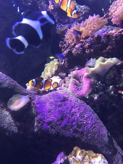 Underwater Animal Themes Sea Life Animals In The Wild Coral Nature UnderSea Swimming Water Animal Wildlife Aquarium One Animal No People Beauty In Nature Clown Fish Day