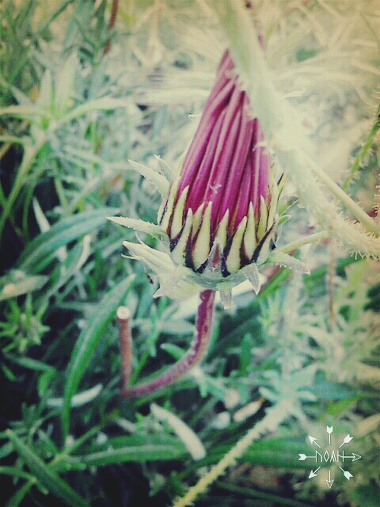 Beauty In Nature Nature Flower Fragility Plant Natural Beauty Lovelovelove Outdoors Plants 🌱 Beautiful Nature Naturelovers Details Textures And Shapes KissMe Violeta Mobile Photography Beautiful Day Lines, Shapes And Curves Freshness