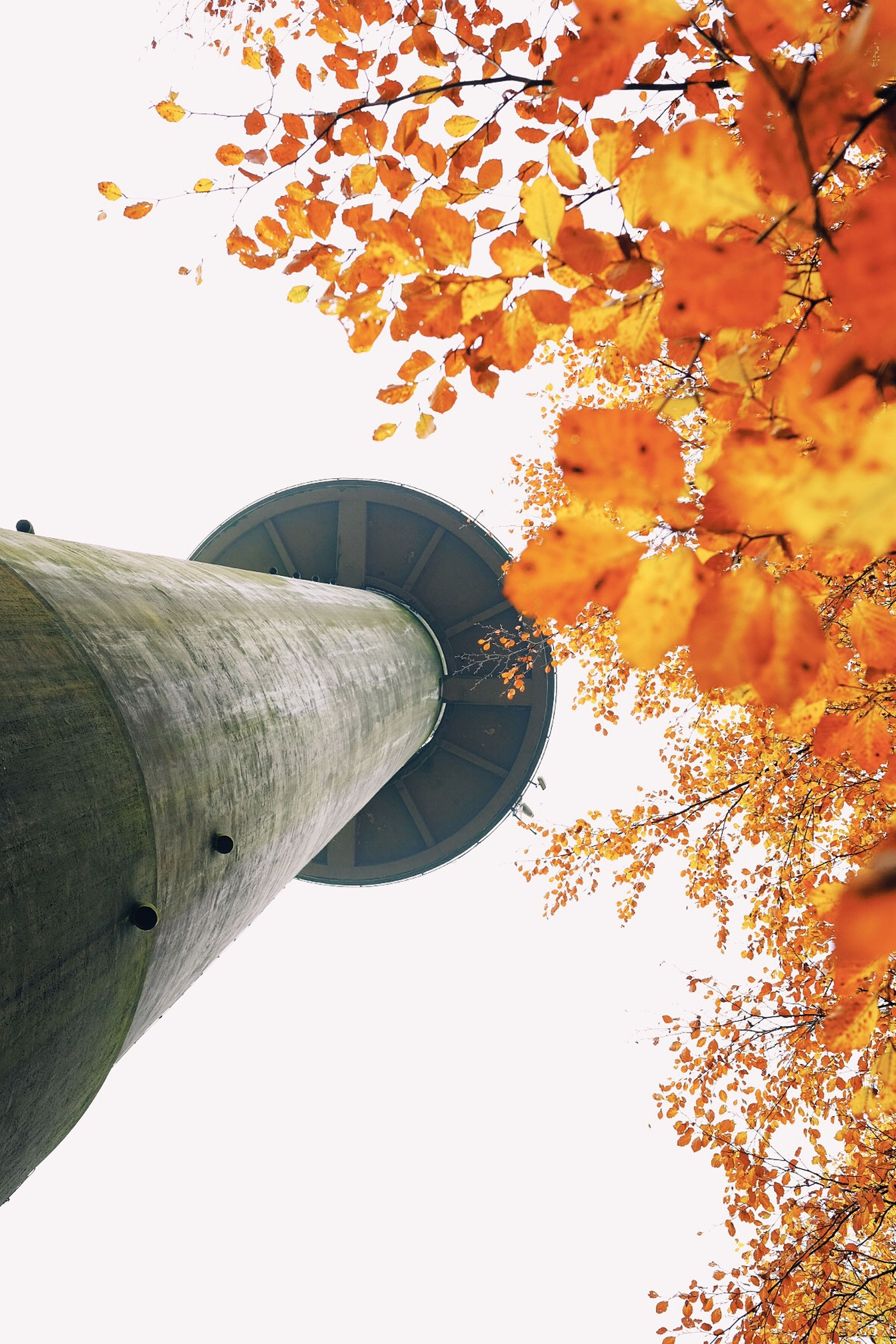 low angle view, built structure, architecture, tree, clear sky, branch, building exterior, part of, cropped, orange color, growth, outdoors, tower, day, sky, no people, directly below, yellow, metal, autumn
