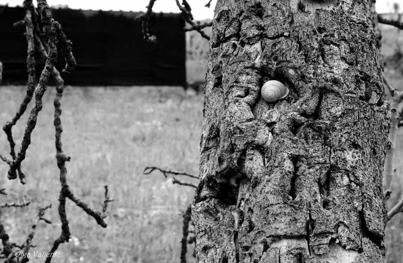 focus on foreground, tree trunk, day, no people, textured, tree, outdoors, close-up, nature