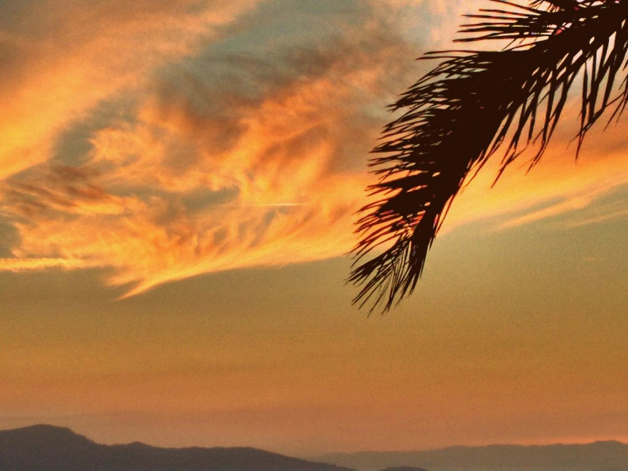 Por do sol na beira mar. Florianópolis - SC-Brasil Sunset Palm Tree Travel Scenics Sky Cloud - Sky Idyllic Silhouette Beauty In Nature Nature Multi Colored Tropical Climate Vacations Sea Outdoors Beauty No People Tree Horizon Over Water Water