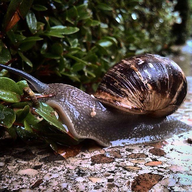 Winteriscoming Snail Rain Cold Wet חורף קר ברלה