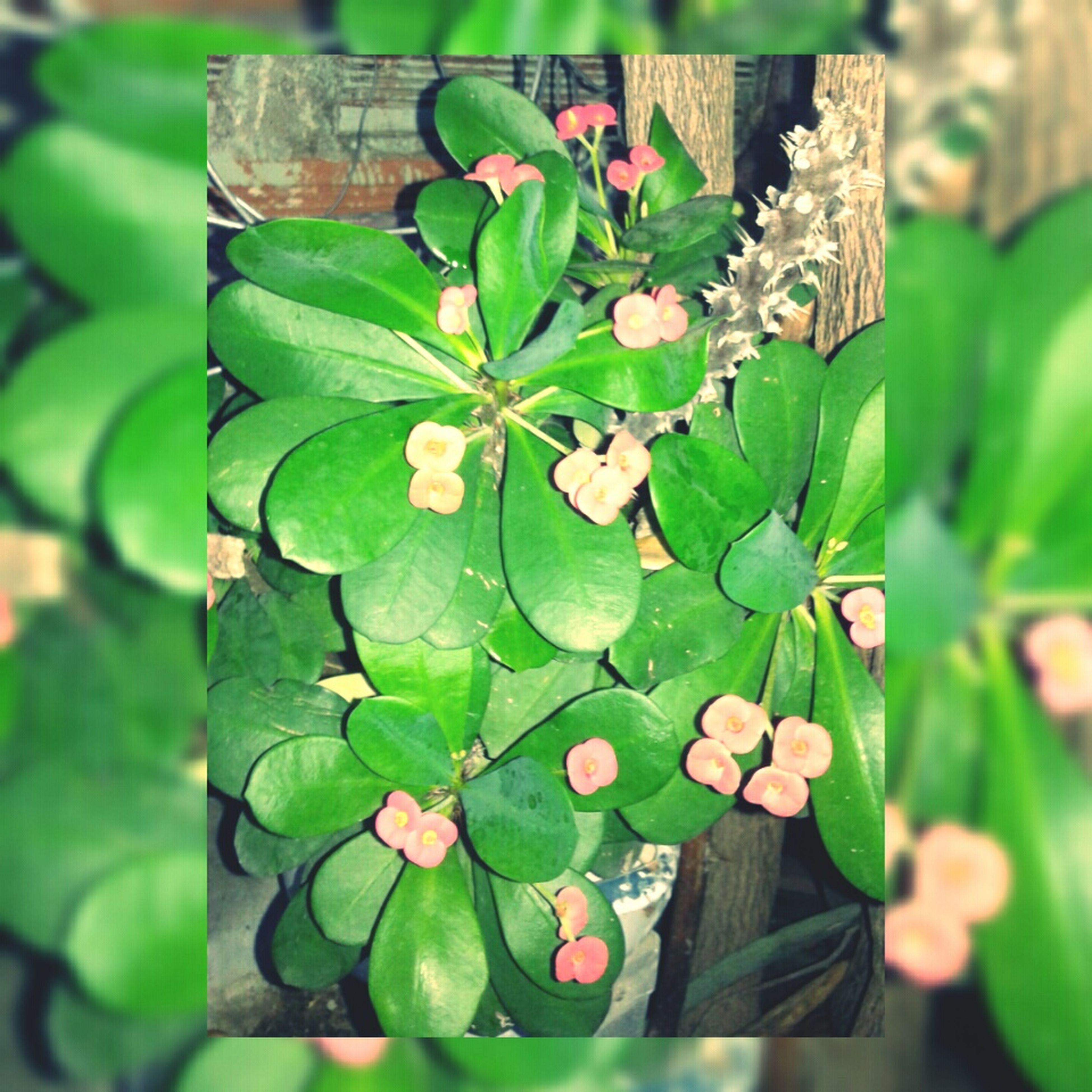 leaf, growth, green color, close-up, plant, focus on foreground, nature, freshness, fragility, beauty in nature, botany, leaf vein, leaves, growing, outdoors, day, green, stem, potted plant, no people
