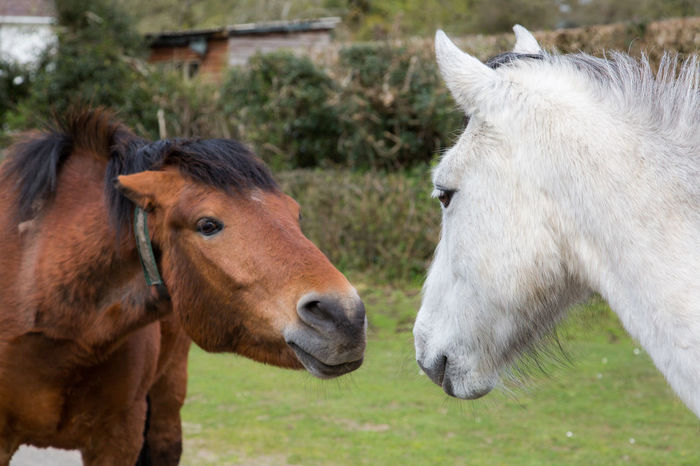 Brown and white horse wooing. Be in love Animal Themes Be In Love Brown Calf Countryside Couple Cue Date Different Domestic Animals Farm Grandson Horses Livestock Love Mammal Mature Adult Old Sweet Togetherness Unsure Valentine's Day  White And Black Always Be Cozy