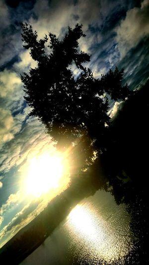 Epic Shot Photography Visitkitsap Getty X EyeEm Sunset_captures Northwestsunsets For The Love Of Trees ~ Treelovers Nature Photography EpicShotPhotography
