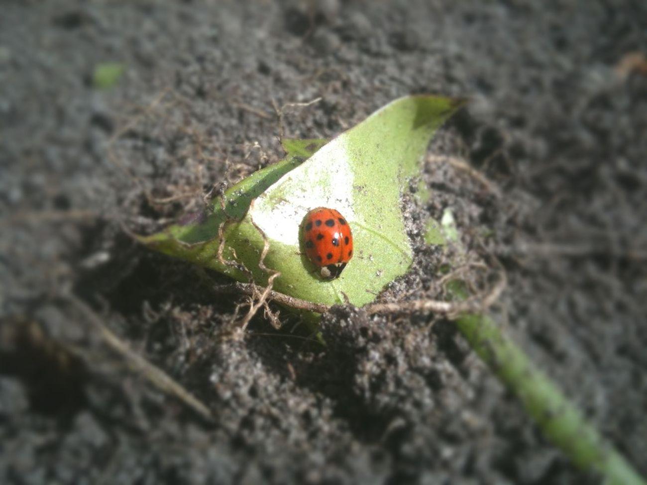 #iphoneography #malditoiphone #bugs natura
