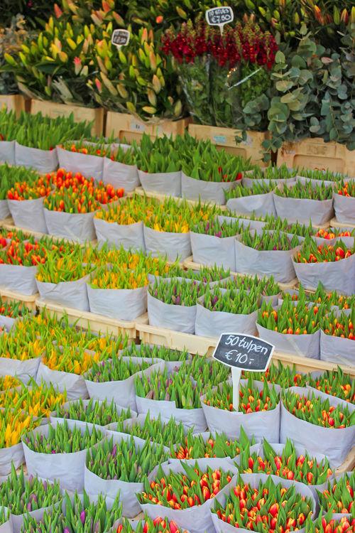 Tulips for sale. Flower Plant Tulips Tulips🌷 Bloemenmarkt Amsterdam Amsterdam City