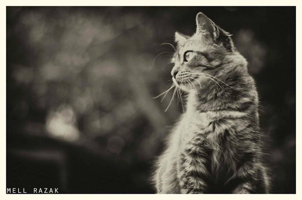 domestic cat, pets, domestic animals, one animal, animal themes, feline, cat, mammal, focus on foreground, whisker, sitting, no people, day, outdoors, nature