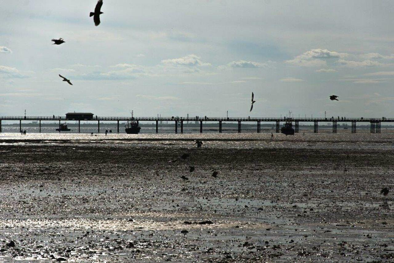 Seaview Sea And Sky Sea View Sea_collection Seascape Seaside Sea Life Sea Tide Southendonsea Southend On Sea England🇬🇧