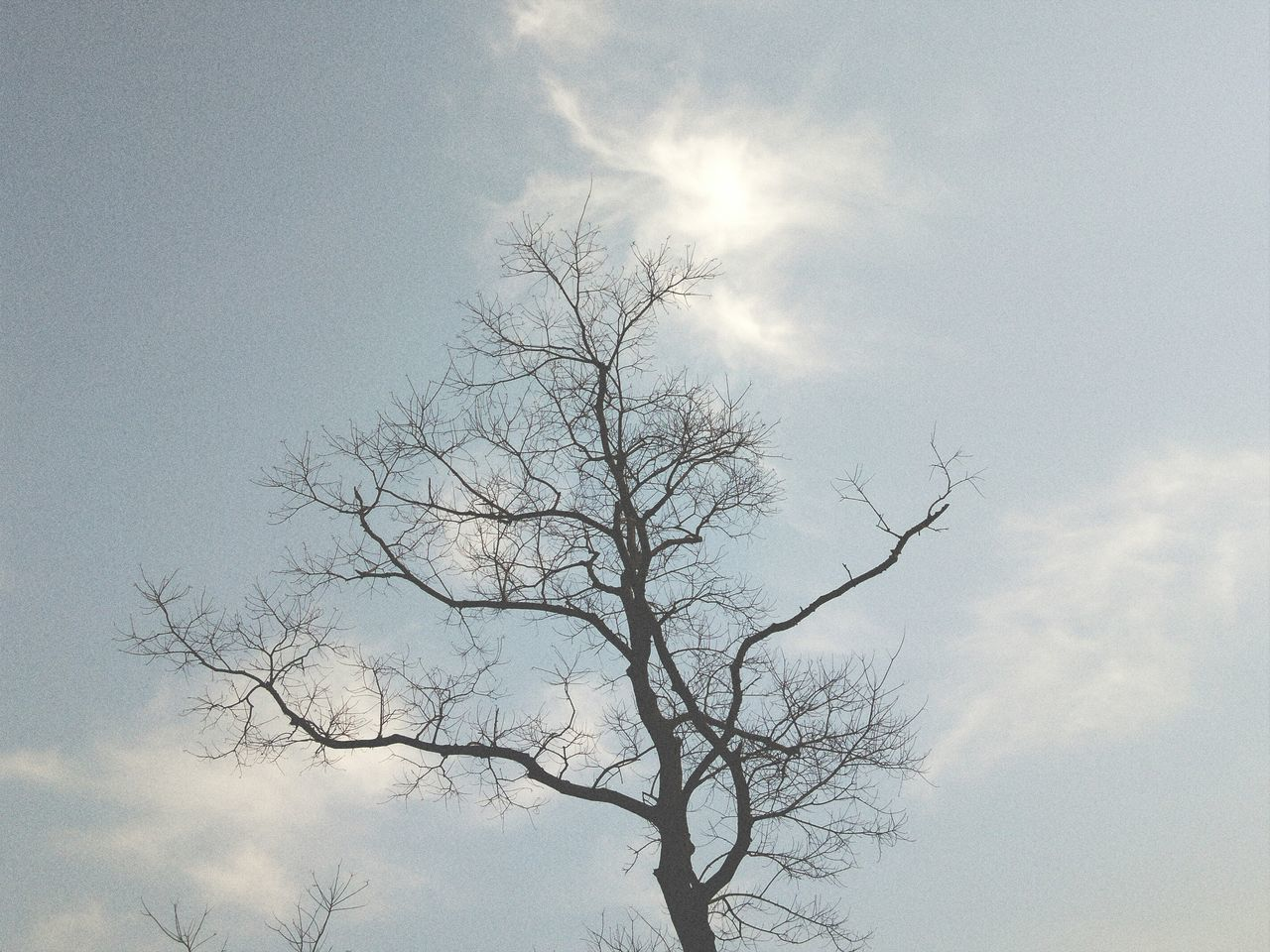 Tree Sky No People Nature Cloud - Sky Bare Tree Outdoors Branch Beauty In Nature Day Phone Photography Light Up Your Life Sunshine ☀ Healer Alone Time Tree Nature No Bird In Sight 2016 Picture Beauty In Nature