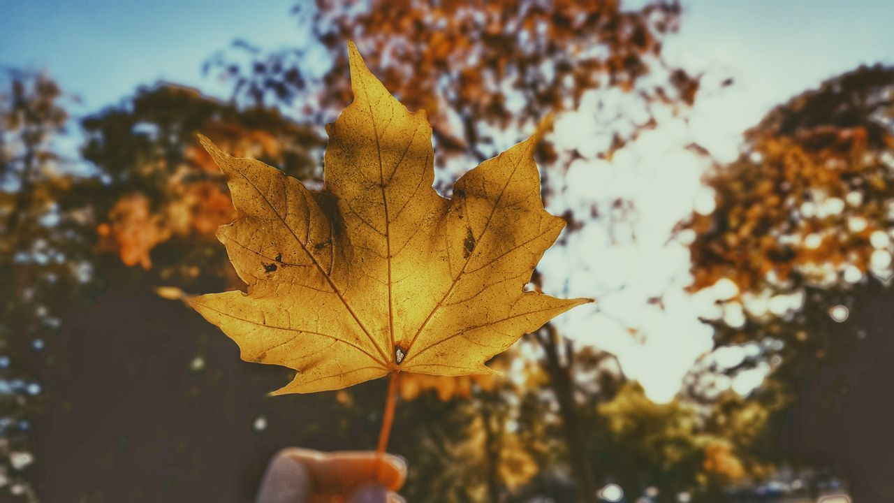 Autumn colours Leaf Nature Autumn Close-up Outdoors Yellow Beauty In Nature Colorful Photography Themes Photographing Nature
