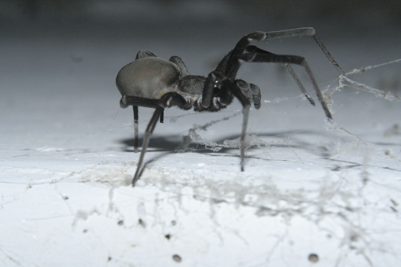 Ara Araña Arácnido Insectos Natura Nature Spyder Spyder Net Tela De Araña Telaraña