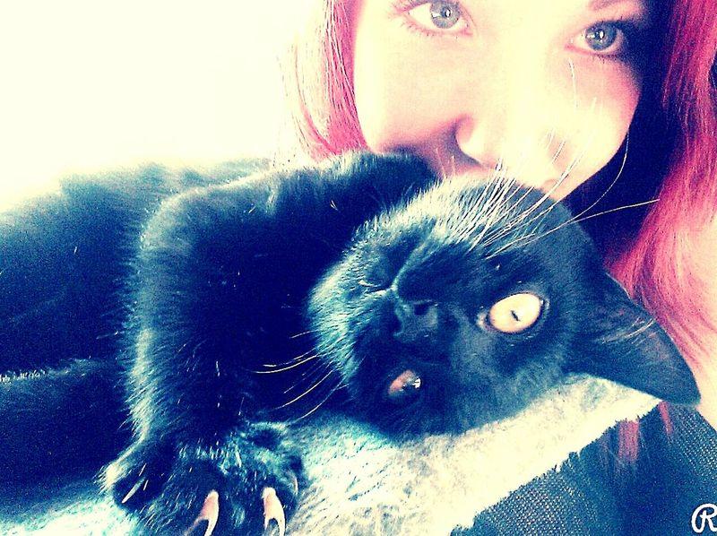 Meine Kleine ❤ Katzenliebe Blue Eyes Katze