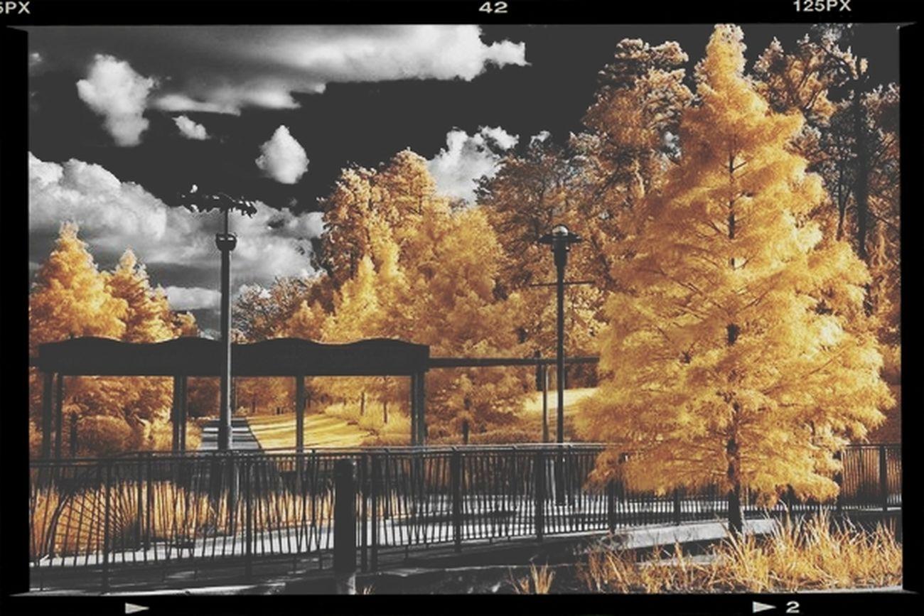 Autumn Helios-spada