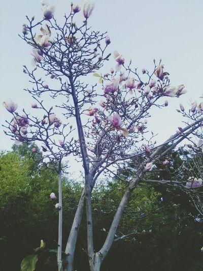 Flowers 每次都觉得照片灰朦朦,应该是心情和性格吧