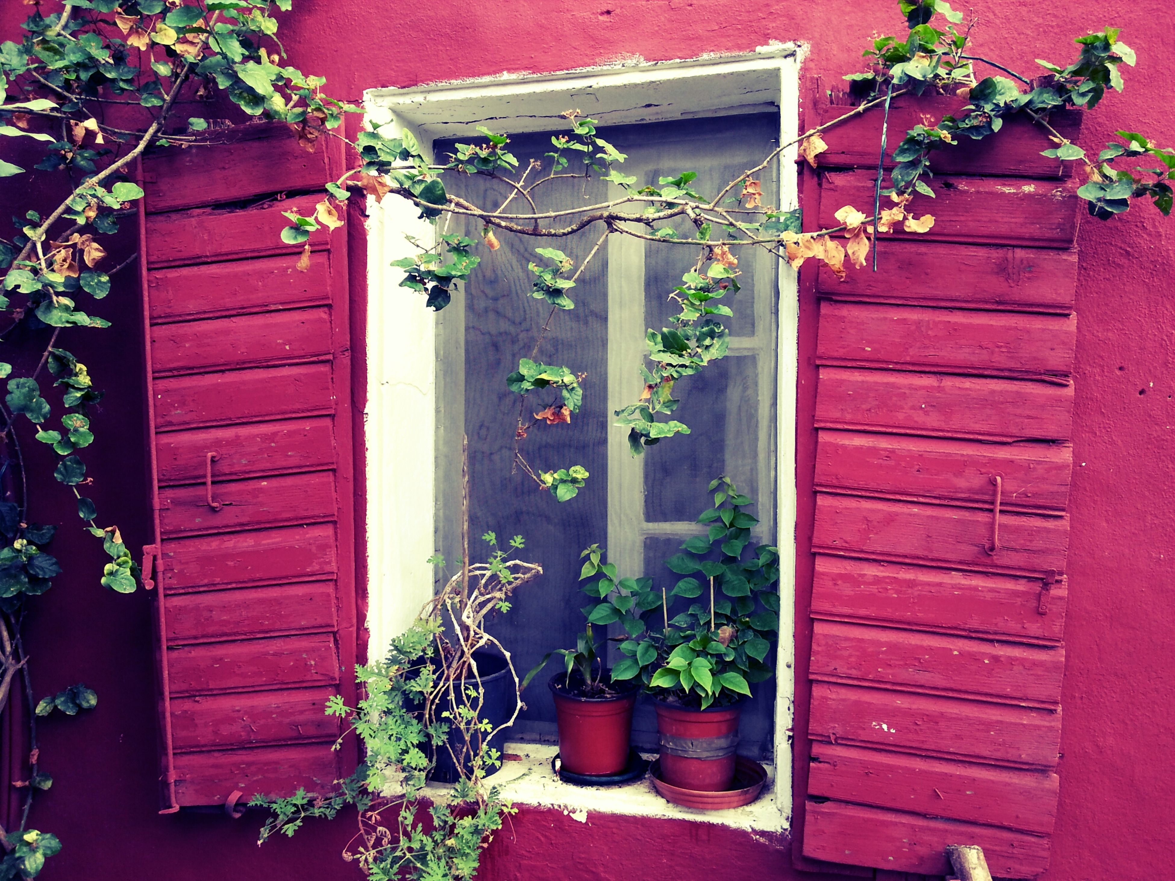 plant, potted plant, door, house, built structure, building exterior, architecture, growth, closed, window, red, flower, wood - material, wall - building feature, leaf, entrance, wall, ivy, flower pot, residential structure