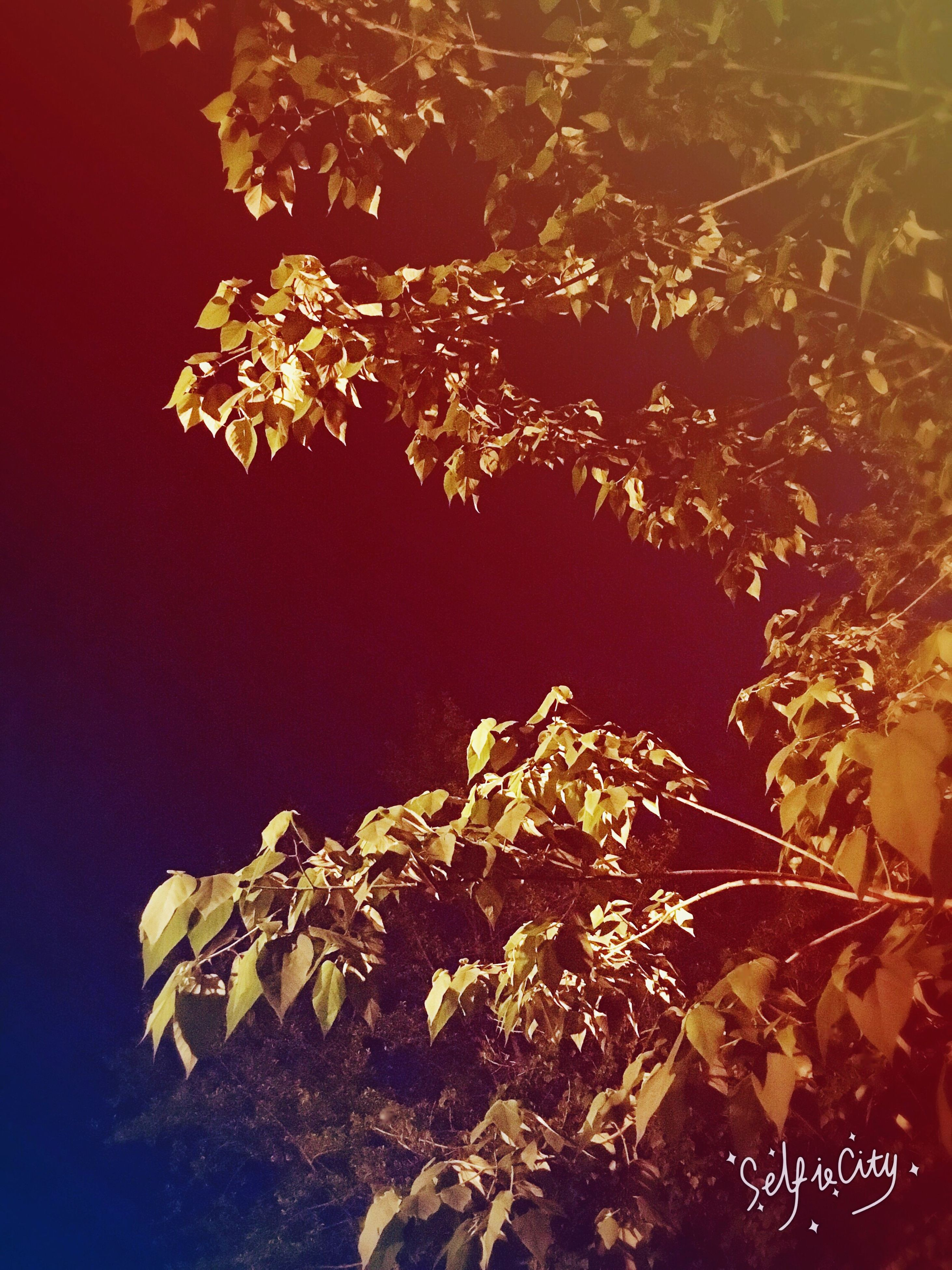 leaf, low angle view, nature, growth, night, close-up, branch, tree, beauty in nature, autumn, no people, outdoors, plant, tranquility, sunlight, change, leaves, yellow, orange color