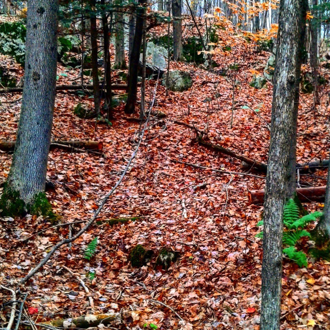 Terreminer Nature Beauty In Nature Outdoors Tree Autumn Automne Beauty In Nature EyeEm Nature Lover Orange Granby
