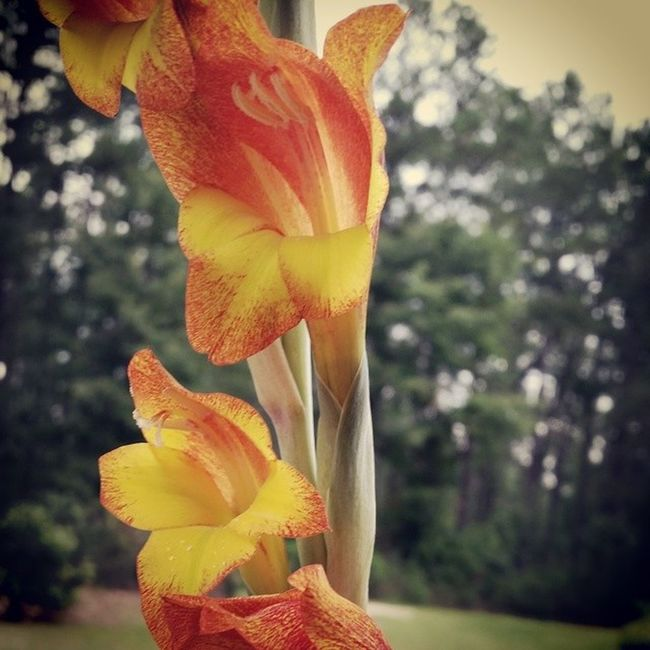 Good morning! Flowers Blooms Harrisonga Nature vsco vscocam vscopictures vscogood instagood photooftheday iggeorgia ga ruralgeorgia