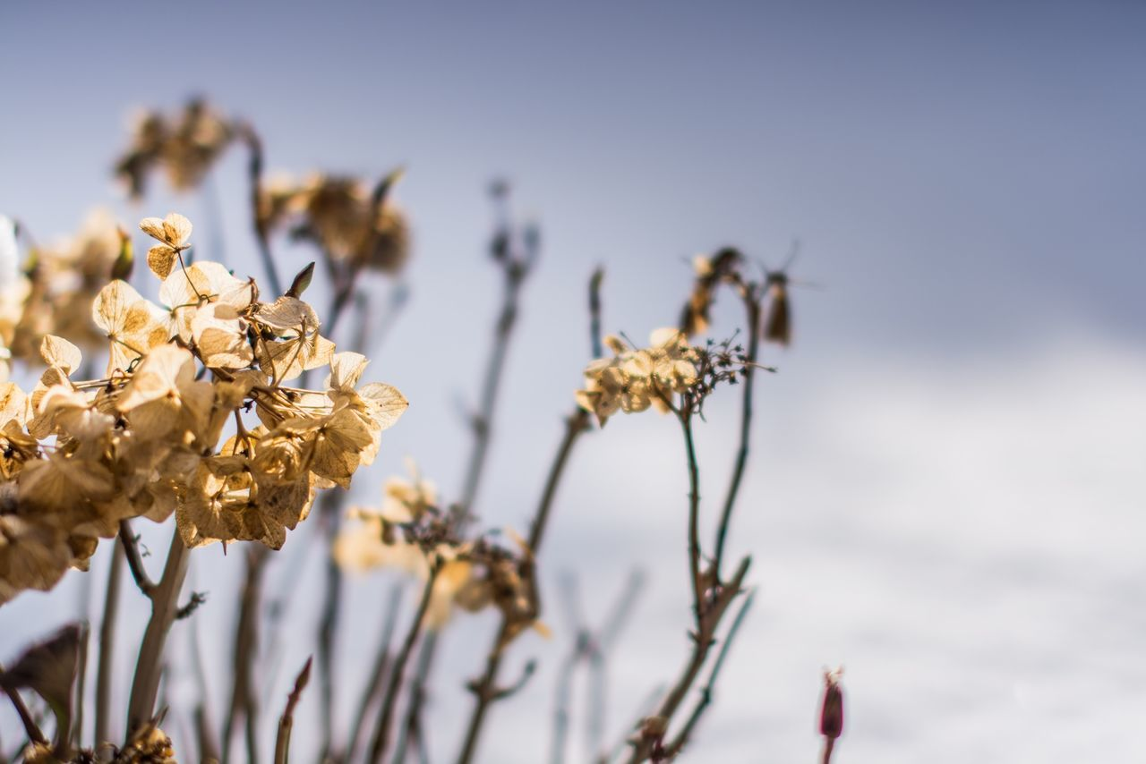 Beautiful stock photos of sweden, Beauty In Nature, Blooming, Brevik, Close-Up