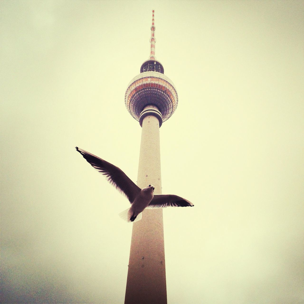Tvtower Alexanderplatz Dove Pigeon EyeEm Deutschland EyeEm Best Shots - Architecture EyeEm Best Shots Streetphotography EyeEm Animal Lover OpenEdit