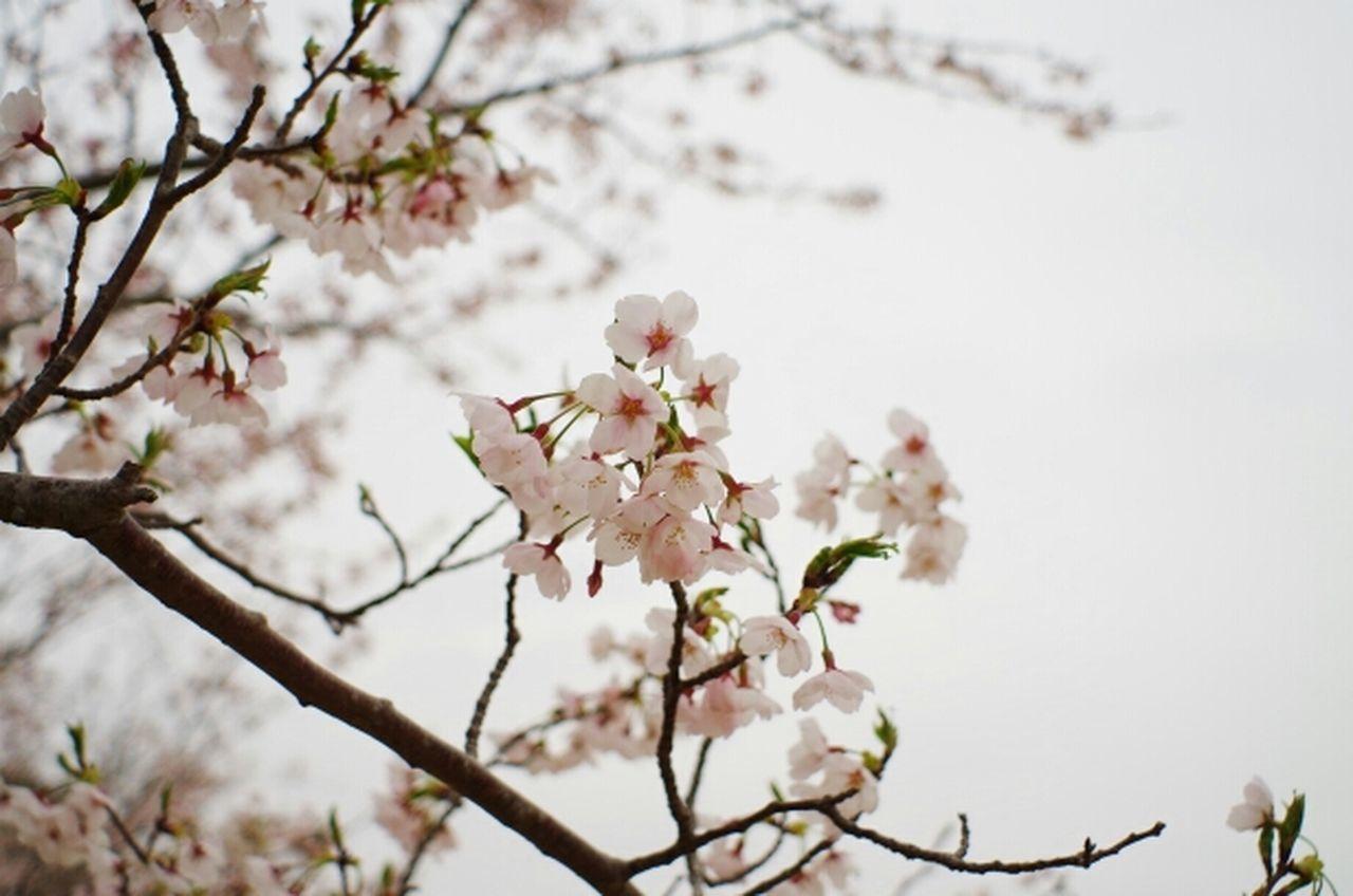 Sakura Takumar 28mm F3.5 Oldlens