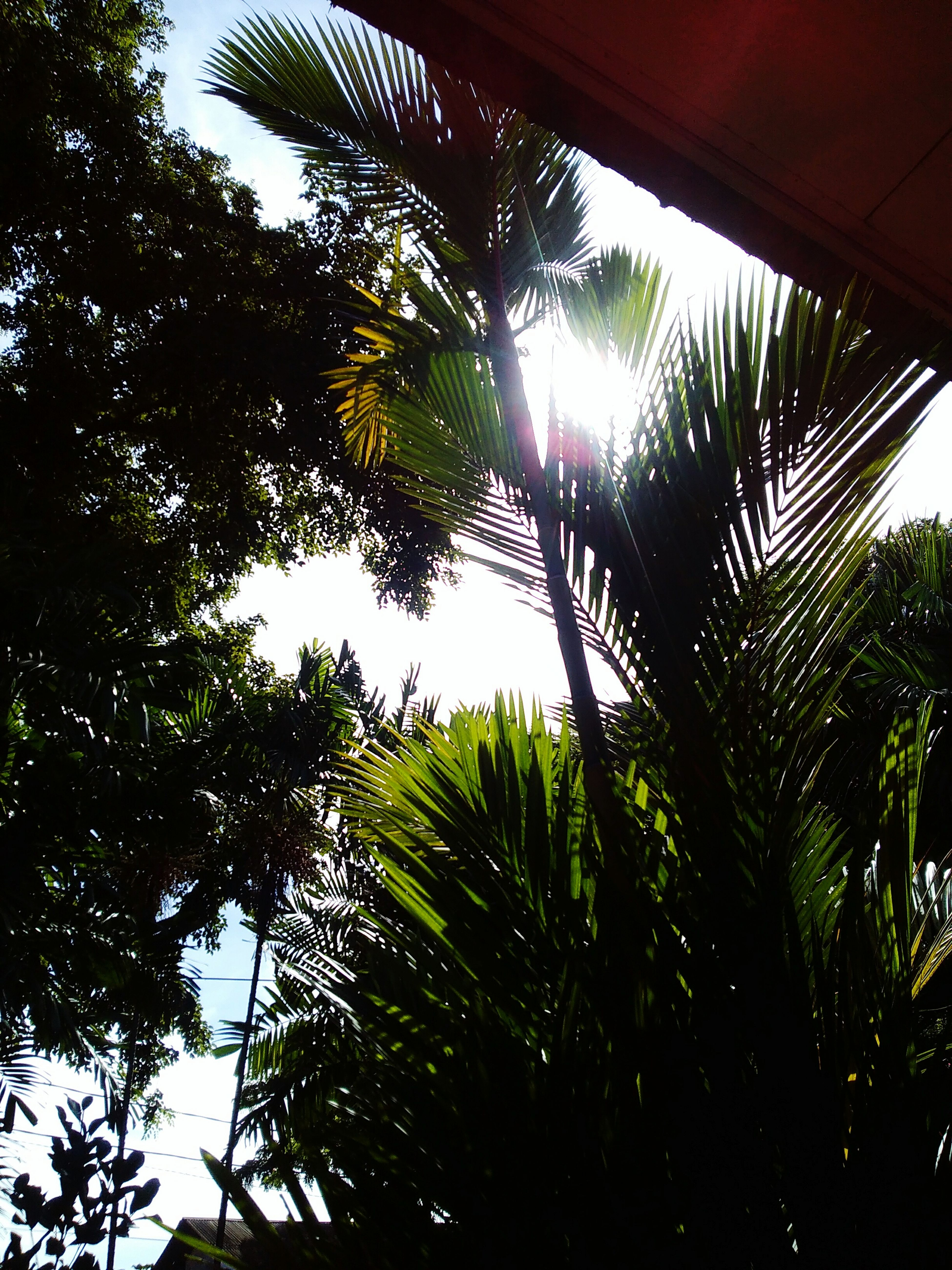 Nature's Diversities Forest In City Sunshine ☀ In The Dark Situation Different Sensation Pure Natural