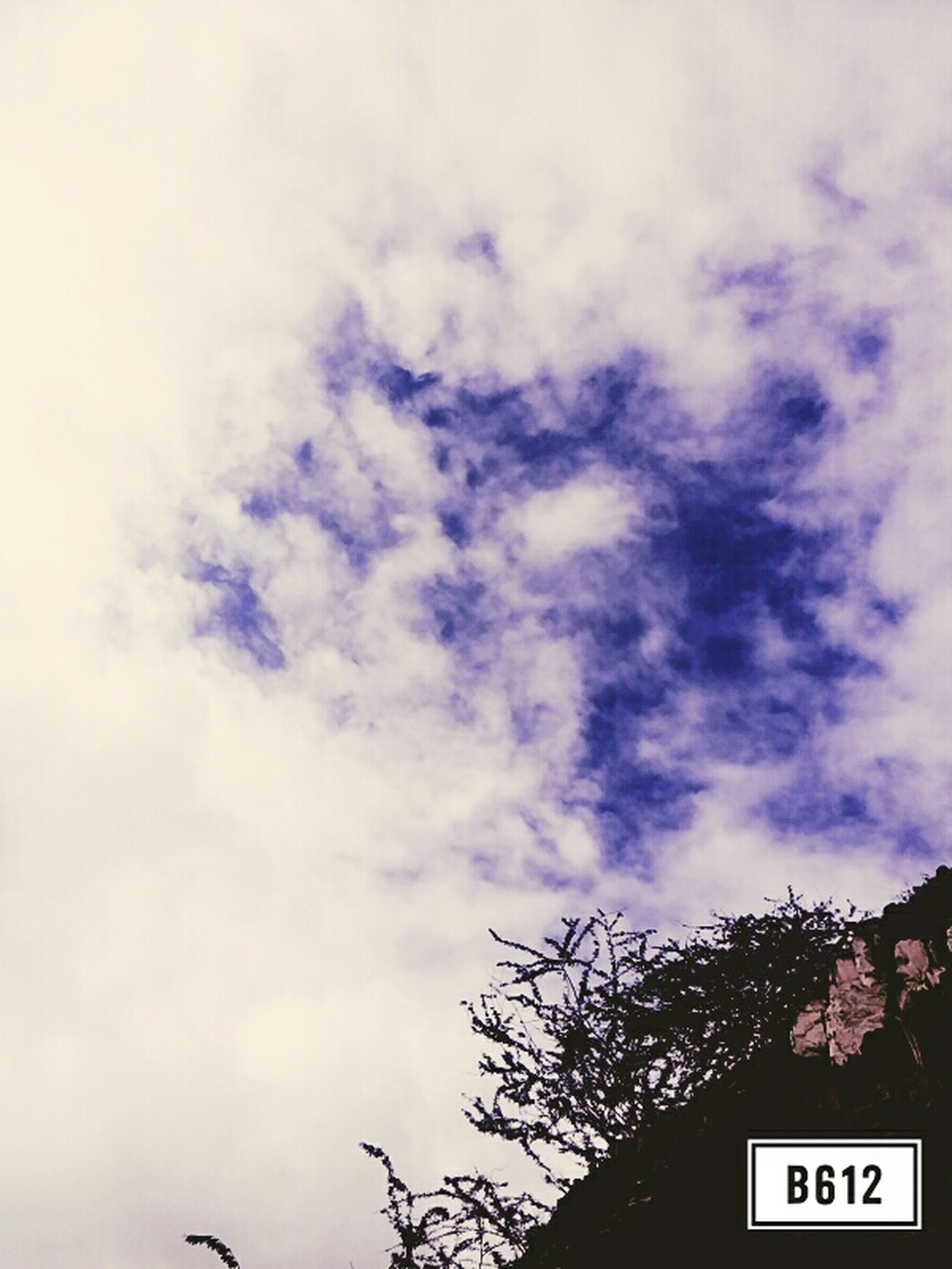 low angle view, tree, sky, text, communication, silhouette, western script, cloud - sky, high section, nature, branch, growth, outdoors, beauty in nature, no people, bare tree, tranquility, cloudy, day, cloud