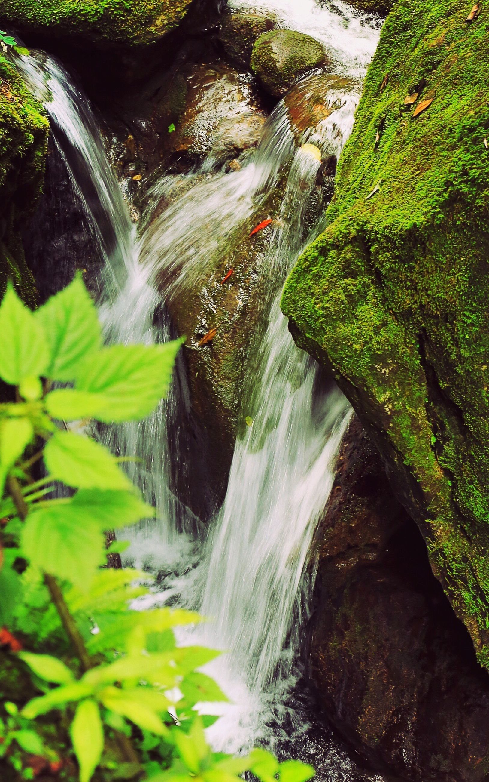 waterfall, flowing water, water, motion, flowing, long exposure, beauty in nature, nature, forest, scenics, rock - object, blurred motion, tree, stream, plant, growth, green color, idyllic, moss, outdoors