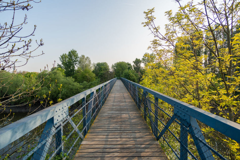 Beauty In Nature Clear Sky Day Footbridge Growth Nature No People Outdoors Railing Sky Tree