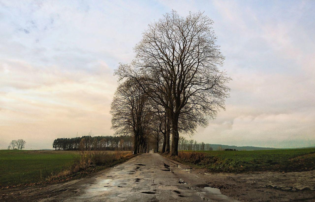 Nature Tree No People Sunset Grass Scenics Sky Outdoors Road Droga Warmia Polska Poland
