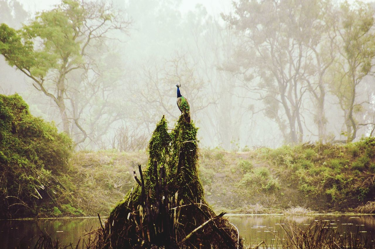 Beautiful stock photos of peacock, Animal Themes, Animals In The Wild, Beauty In Nature, Cold Temperature
