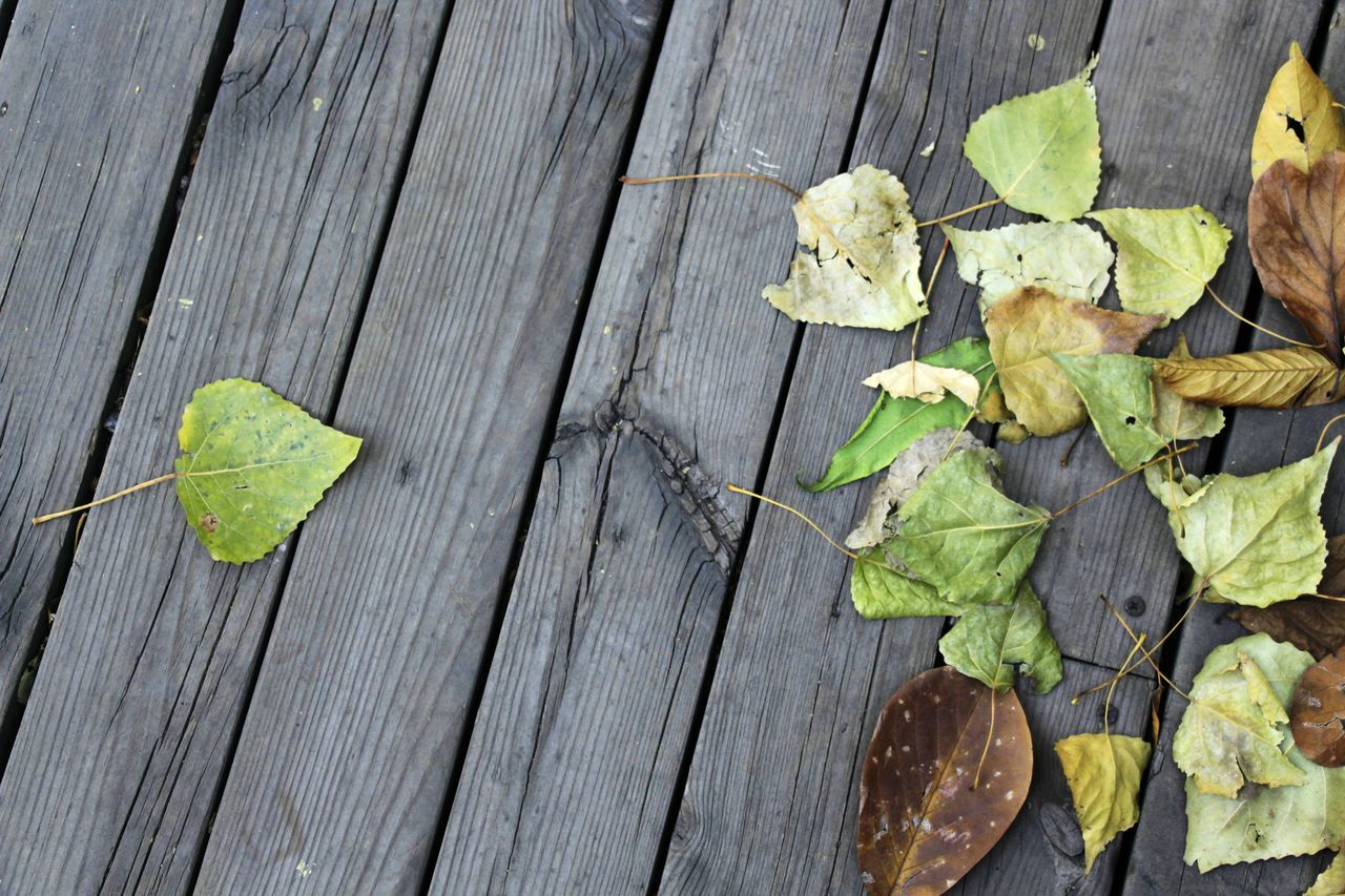 Autumn Autumn Leaves Beauty In Nature Different Different Is Better . ❤ Fallen Fallen Leaves Fragility Freshness Green Color Leaf Leaves Nature Plant Separation Wood - Material WoodenBreaking away from others is brave