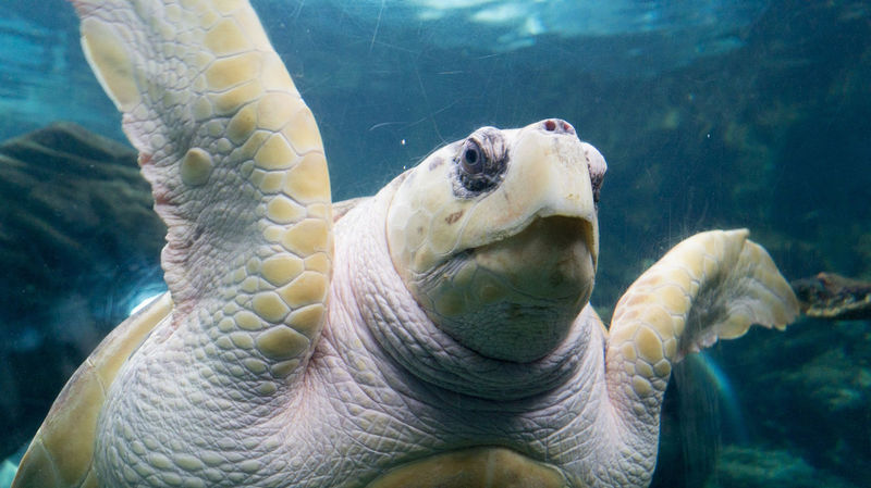 EyeEm Selects Underwater Animal Wildlife Sea Life UnderSea No People Swimming Close-up Water Nature Animal Themes Sea Pictureoftheday Nature One Animal Turtle Turtle Cuteness Turtles Swimming