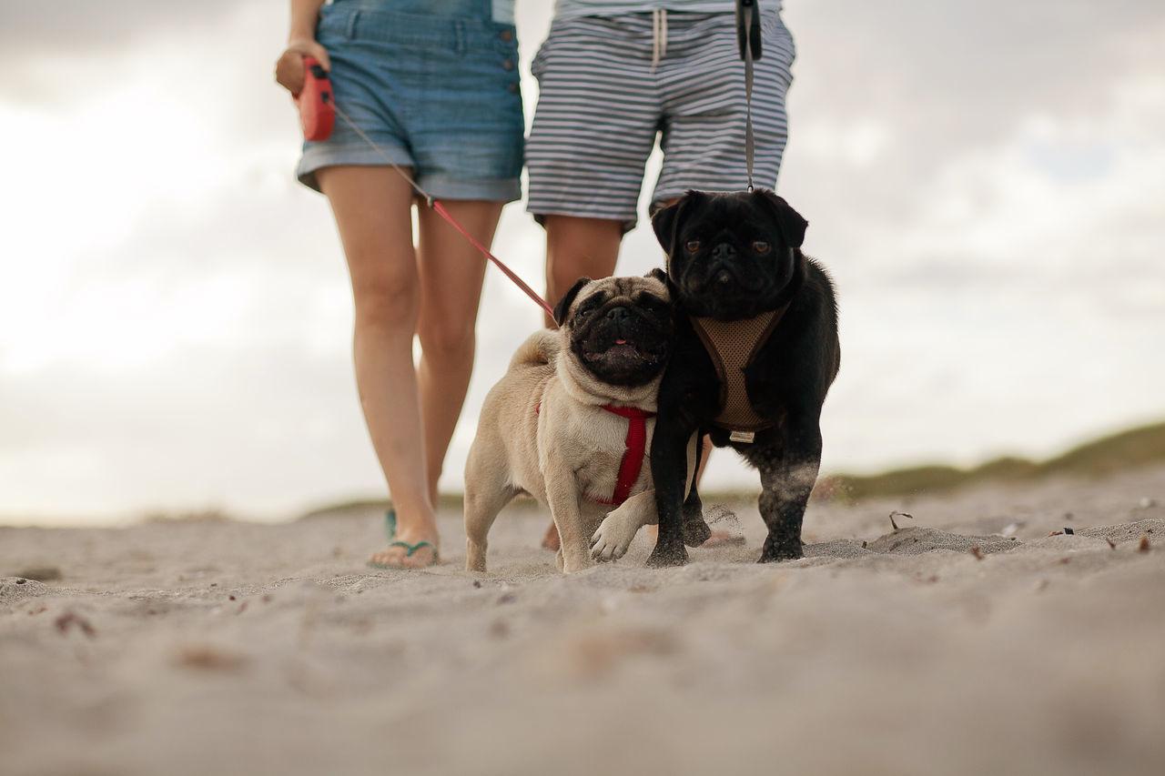 Beautiful stock photos of walk, Animal Themes, Beach, Day, Dog