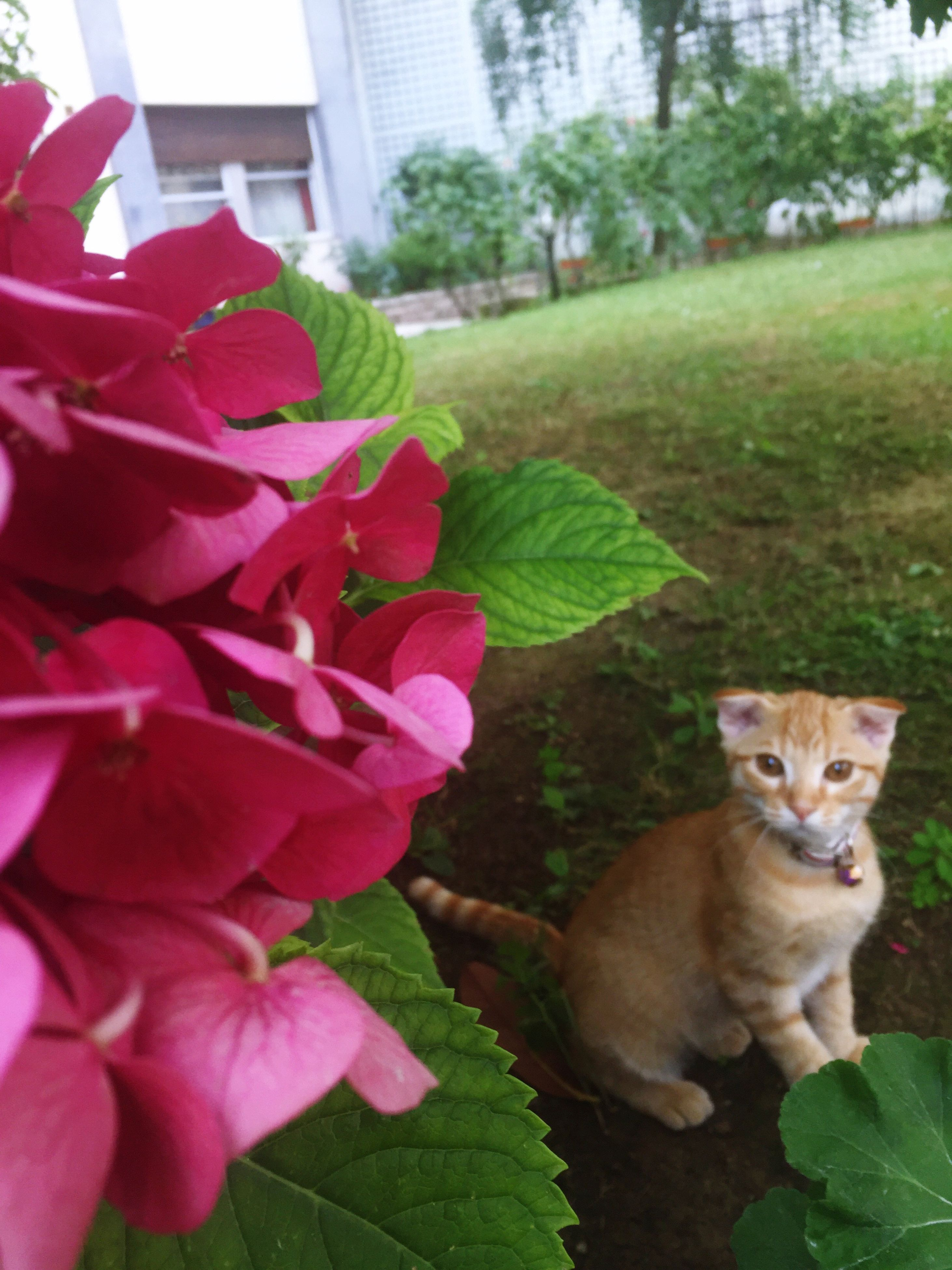 domestic cat, animal themes, one animal, pets, feline, domestic animals, mammal, leaf, plant, looking at camera, portrait, no people, growth, day, outdoors, flower, nature, sitting, close-up