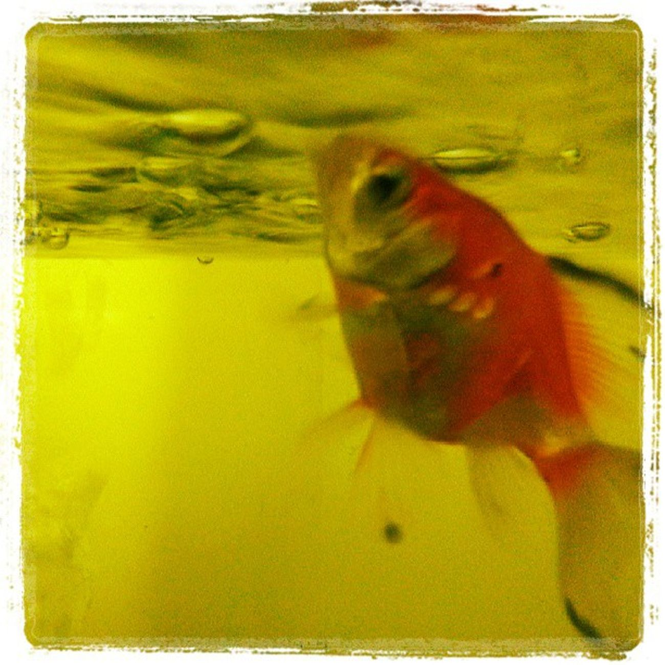 My fish eatting ^-^