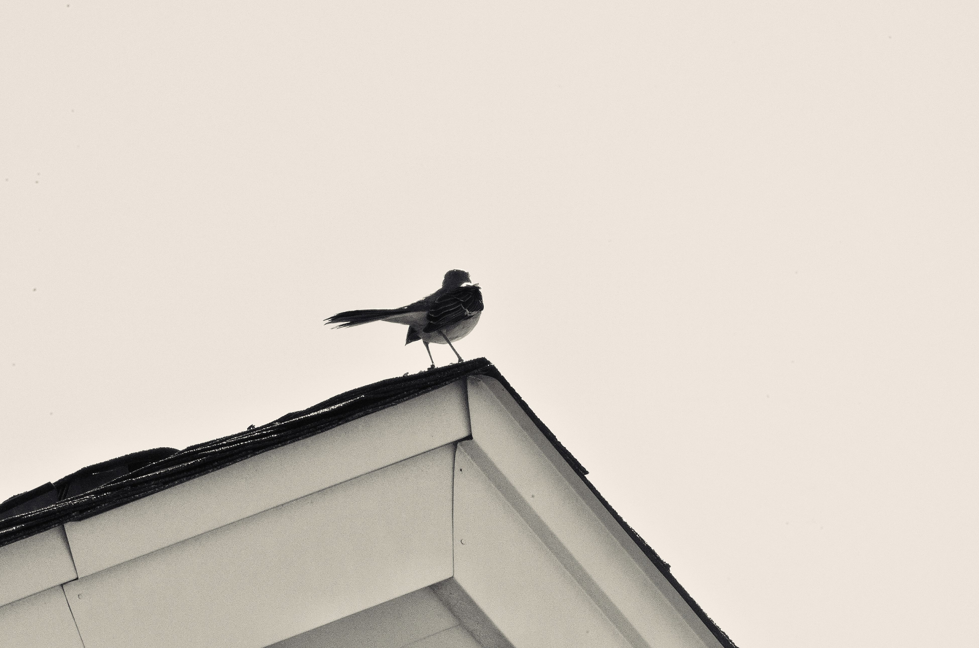bird, low angle view, no people, animal themes, animals in the wild, one animal, outdoors, day, perching, animal wildlife, nature