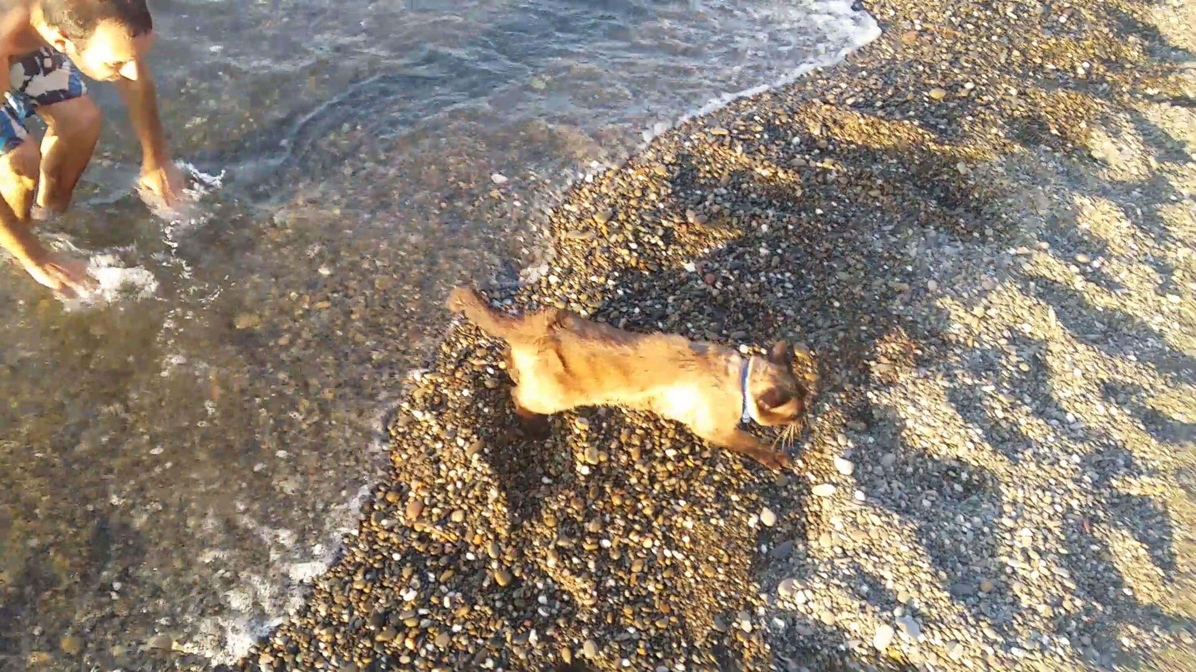 water, animal themes, one animal, high angle view, swimming, animals in the wild, sea, beach, sunlight, mammal, wildlife, dog, pets, nature, shore, domestic animals, sand, outdoors, rippled