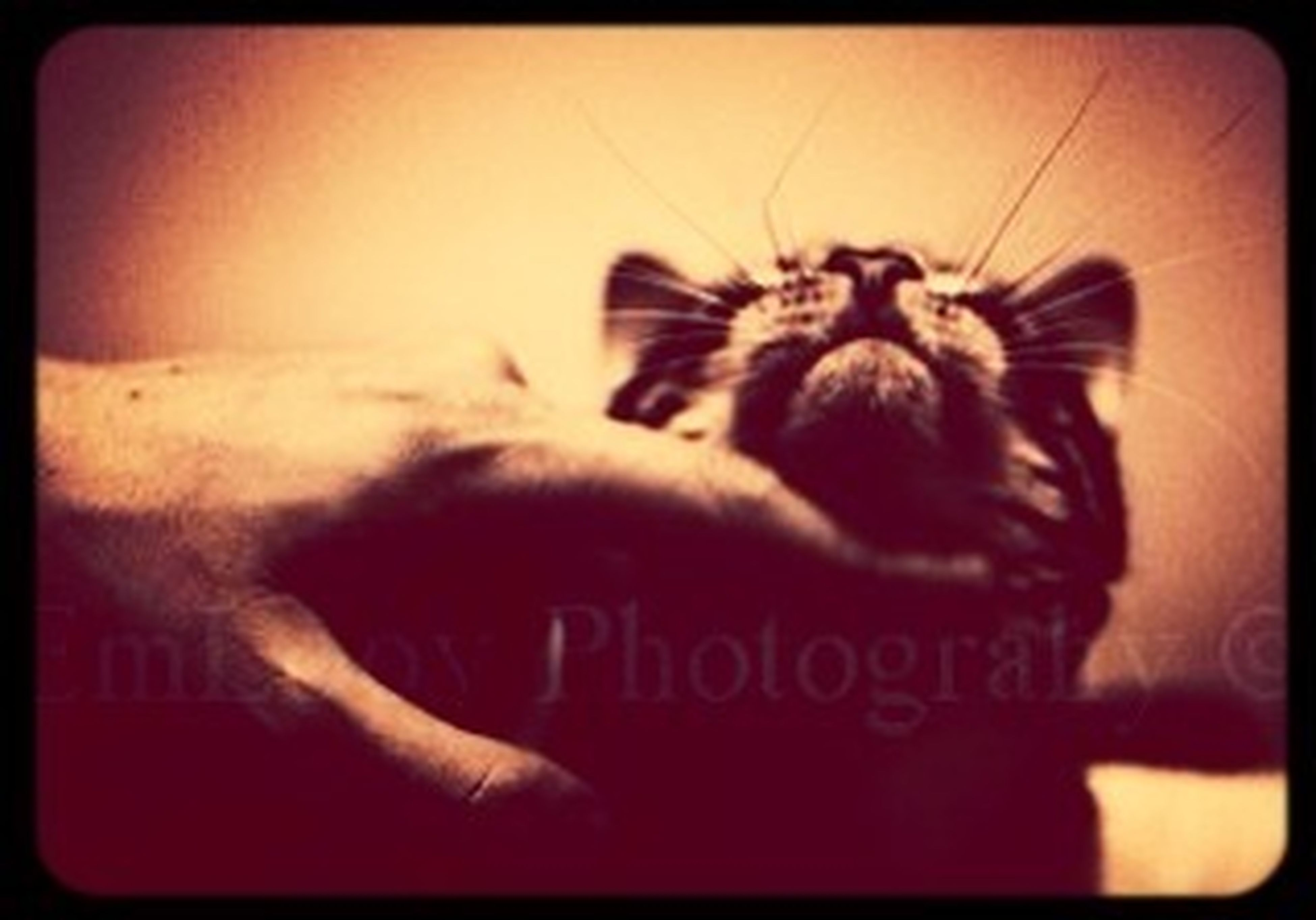 Pet Photoshoot #cat #whiskers #vintage #d7000