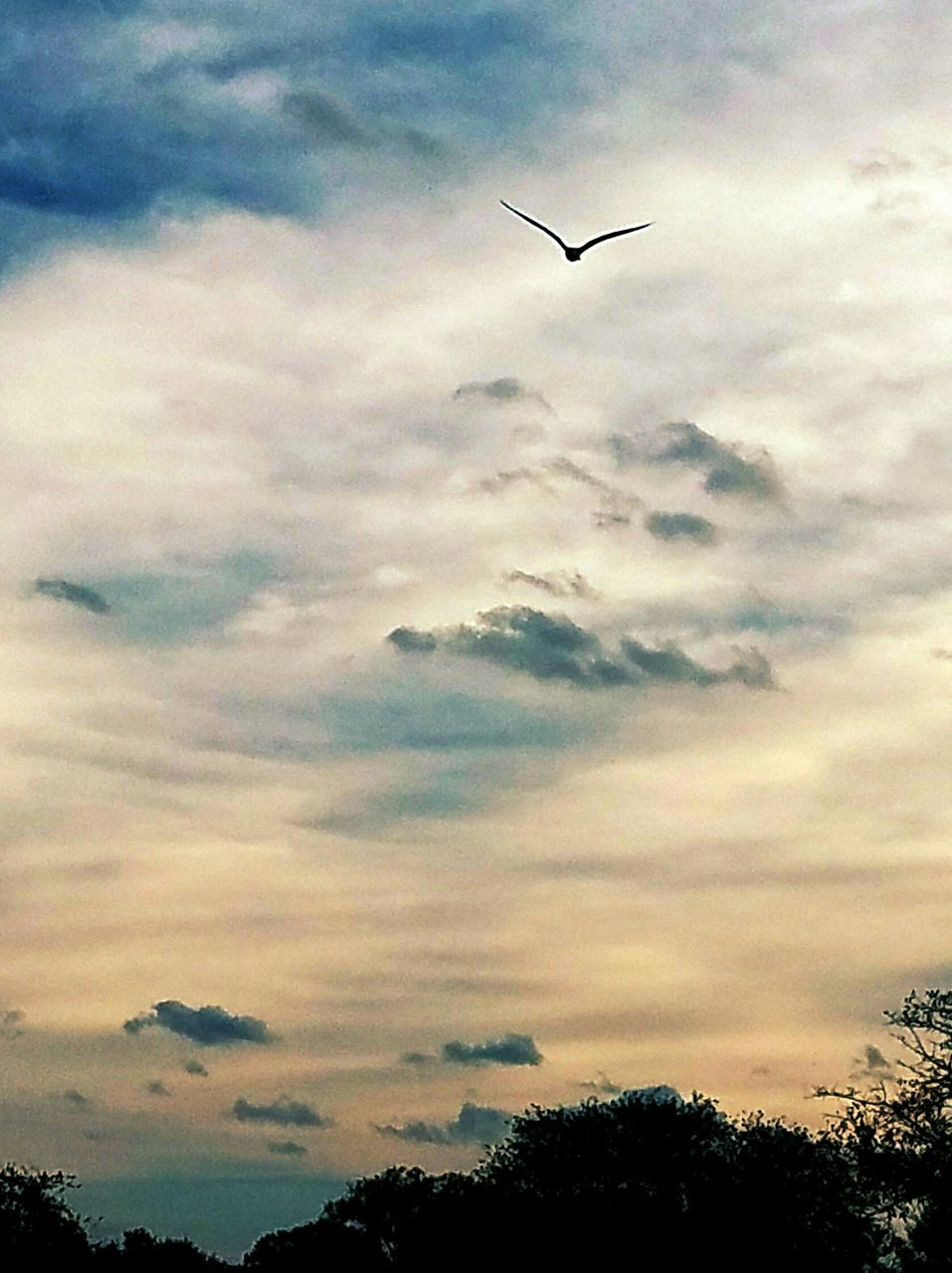 flying, sky, cloud - sky, silhouette, tree, low angle view, animal themes, bird, mid-air, one animal, animals in the wild, sunset, nature, beauty in nature, outdoors, no people, spread wings, animal wildlife, scenics, day