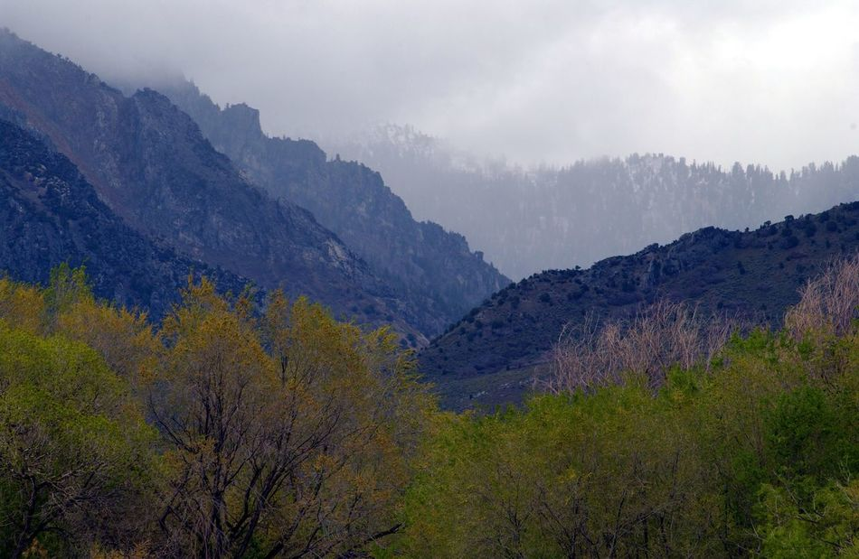 Beauty In Nature Cottonwood Trees Day Fog Forest Landscape Morning Mountain Mountain Range Nature No People Outdoors Pine Tree Pine Woodland Scenics Tree Tree Area