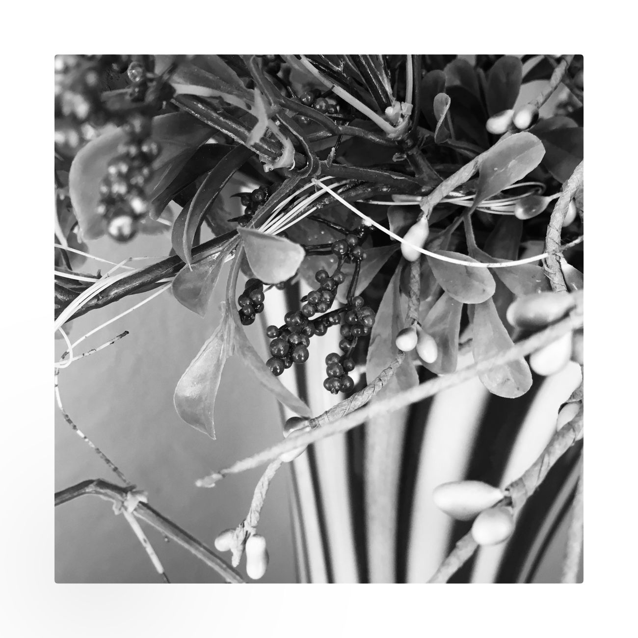 Close-up No People Nature Day Outdoors Black And White Photography Monochrome Blackandwhite Home Interior