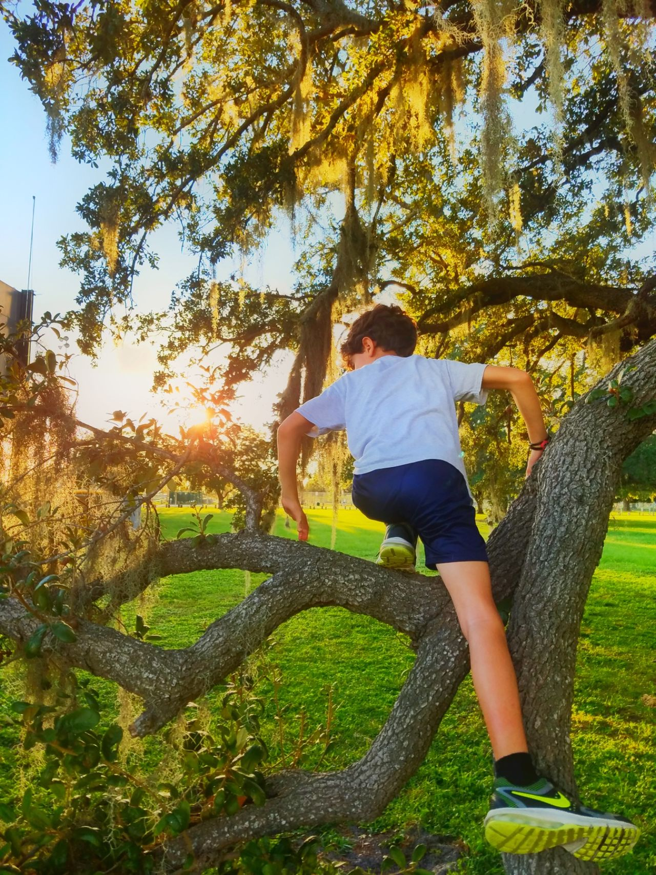 Enjoy The New Normal Tree Sunlight Full Length One Person Leisure Activity Rear View Outdoors Shadow Nature Sky Real People Day Men People Boy Climbing Tree