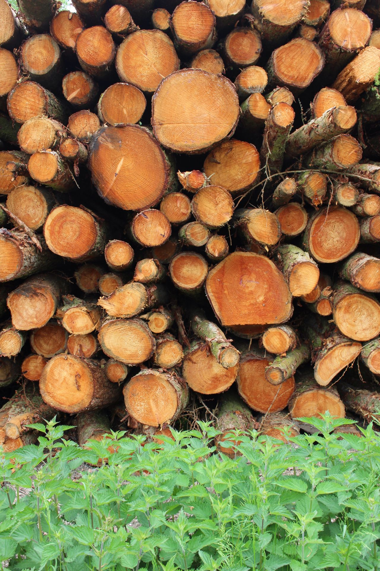 Contrast! Timber Log Firewood Stack Woodpile Lumber Industry Deforestation Forestry Industry Wood - Material Environmental Issues Heap Large Group Of Objects Abundance Fuel And Power Generation Pile Fossil Fuel Full Frame No People Backgrounds Day