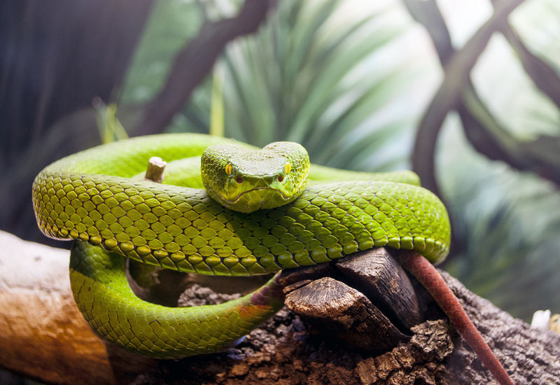 Snake in the zoo Amphibian Animal Animal Head  Beauty In Nature Close-up Day Focus On Foreground Green Green Color Growth Lizard Natural Pattern Nature No People Outdoors Selective Focus Snake Wildlife The Photojournalist - 2016 EyeEm Awards